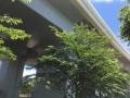170609 明石海峡大橋03