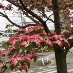 街が花でいっぱいの季節になりました