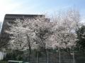小束山本町3