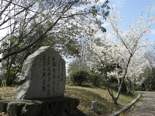 桜と万葉歌碑