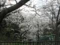 苔谷公園9
