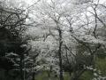 苔谷公園10