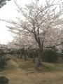 舞子墓園3