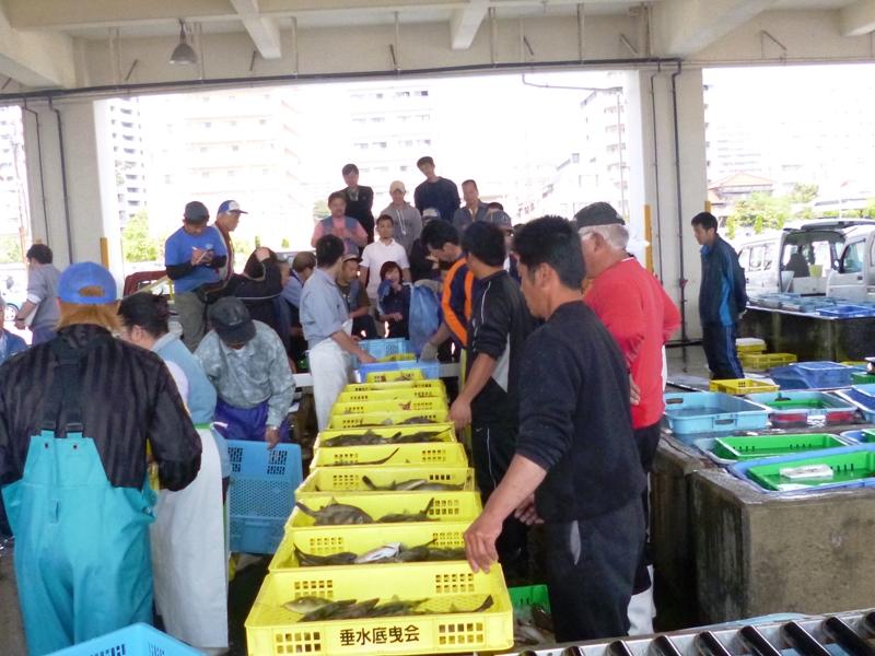 垂水漁港のセリ