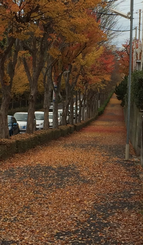 落ち葉のじゅうたん