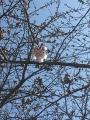 桜のつぼみ2