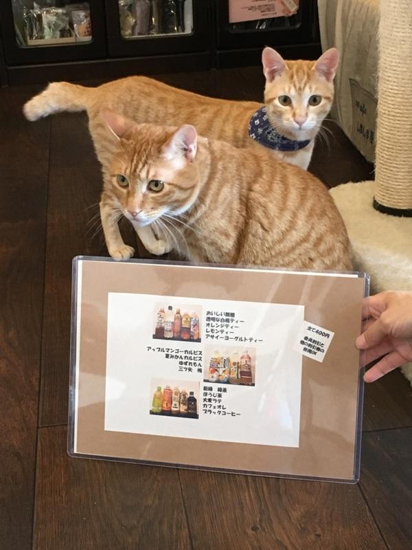 猫ちゃんの魅力を間近で  ~ネコカフェしましま屋~神田町