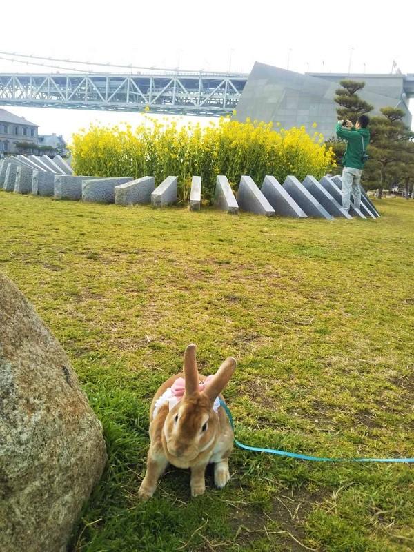 舞子公園でうさんぽ